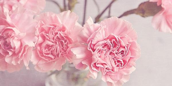 恋愛運アップにもなる花を飾る効果3つ