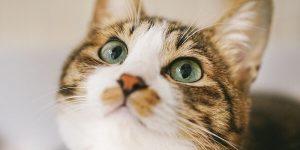 猫系男子の特徴と恋愛傾向!脈ありの見極め方とは