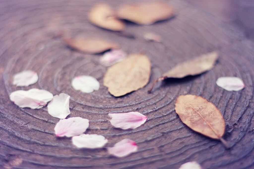花弁と葉っぱ